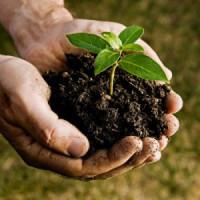 Уход за растениями (0)